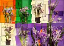 Collage abstracto con el azafrán imagenes de archivo