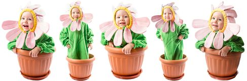 Collage of adorable baby girl dressed in flower costume Royalty Free Stock Images