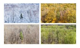 Forest with pine tree in four divisions of the year royalty free stock photos