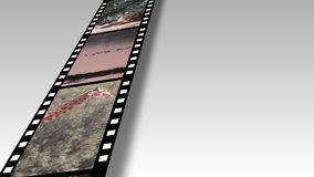 Collage of African Wildlife footage stock video footage