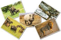Collage africano de la fauna foto de archivo