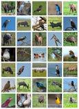 Collage africano del safari Variedad de la fauna foto de archivo libre de regalías