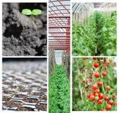 Collage agrícola imagen de archivo libre de regalías