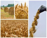 Collage agricole Collection d'image agricole Photographie stock