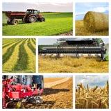 Collage agricolo Raccolta delle immagini agricole fotografia stock
