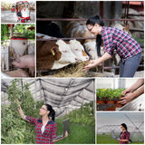 Collage of agricultural industry Royalty Free Stock Image