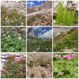 Collage with alpine flowers Stock Photos