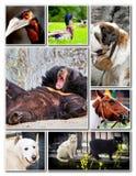 Collage animal Imagenes de archivo