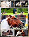 Collage animal Imagen de archivo libre de regalías