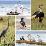 Collage animal africano Imagenes de archivo