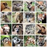 Collage animal de los mamíferos Fotografía de archivo libre de regalías