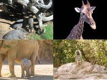 Collage animale Fotografia Stock