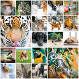 Collage of animals Royalty Free Stock Photos