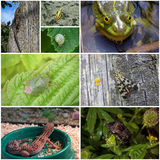 Collage of animals and insects. A collage of eight photos of different animals and insects Royalty Free Stock Photo