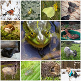 Collage with animals. A collage of 13 pictures with different animals. In the center of the frog Stock Photo