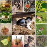Collage with animals. A collage of 13 pictures with different animals. In the center of a surprised kitten Royalty Free Stock Image