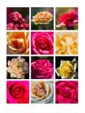 Collage août Photos stock