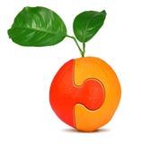 Collage arancione Fotografie Stock Libere da Diritti