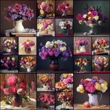 collage Aster och krysantemum blommar vasen royaltyfria bilder