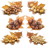 Collage Autumn Royalty Free Stock Images