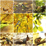 Collage of autumn backgrounds Stock Images