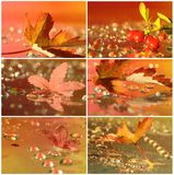 Collage of autumn with drops and leaf Royalty Free Stock Photography