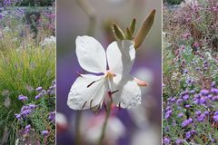Collage - gaura blossom and autumnal park Royalty Free Stock Photography