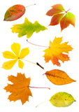 Collage from  autumn leaves Stock Photo