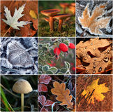 Collage of autumn leaves Stock Image