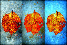 Collage of the autumn leaves frozen in the ice Royalty Free Stock Images