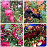 Collage of autumn plants Stock Images