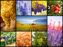 Collage with autumn and summer harvest Royalty Free Stock Photography