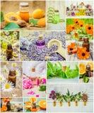 Collage av örter och nödvändig olja Royaltyfri Foto