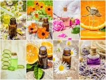 Collage av örter och nödvändig olja Royaltyfria Bilder