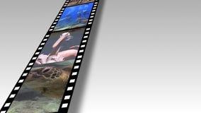 Collage av afrikansk djurlivlängd i fot räknat lager videofilmer