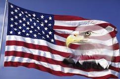 Collage av amerikanska flaggan och den skalliga örnen Royaltyfri Fotografi
