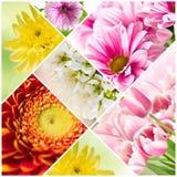 Collage av att blomma blommor arkivfoto