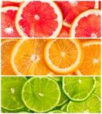 Collage av citrusfrukt royaltyfria bilder