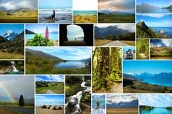 Collage av den nyazeeländska naturen arkivbild