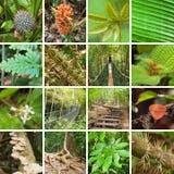 Collage av den Taman Negara nationalparken arkivbilder