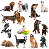 Collage av foto av husdjur Royaltyfri Foto