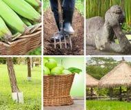 Collage av foto i gröna färger Arkivbild