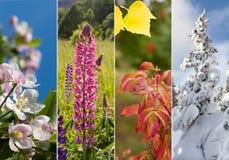 Collage av fyra säsonger Arkivfoton