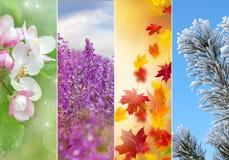 Collage av fyra säsonger Royaltyfria Foton