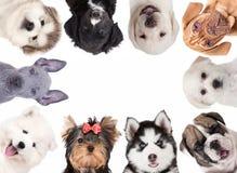 Collage av gulligt behandla som ett barn hundkapplöpning arkivfoto