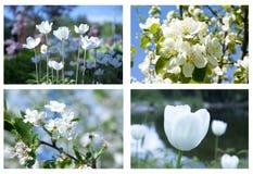 Collage av härliga vita blommor Arkivbild