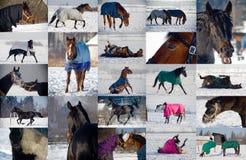 Collage av hästar som spelar i snö royaltyfria bilder
