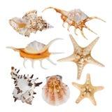 Collage av havsskal som isoleras på vit bakgrund royaltyfri fotografi