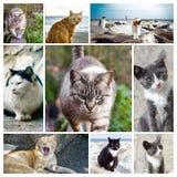 collage av katter - fotoram Fotografering för Bildbyråer
