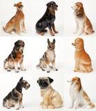 Collage av keramiska statyer av hundkapplöpning royaltyfri fotografi